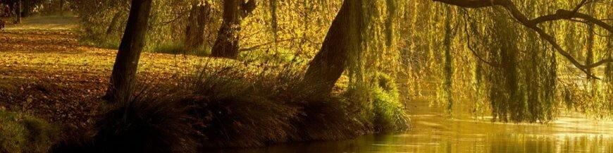Alberi e arbusti per terreno umido, da coltivare nei dintorni del laghetto