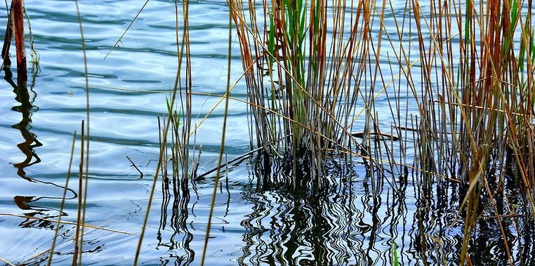 Notizie sulle piante acquatiche