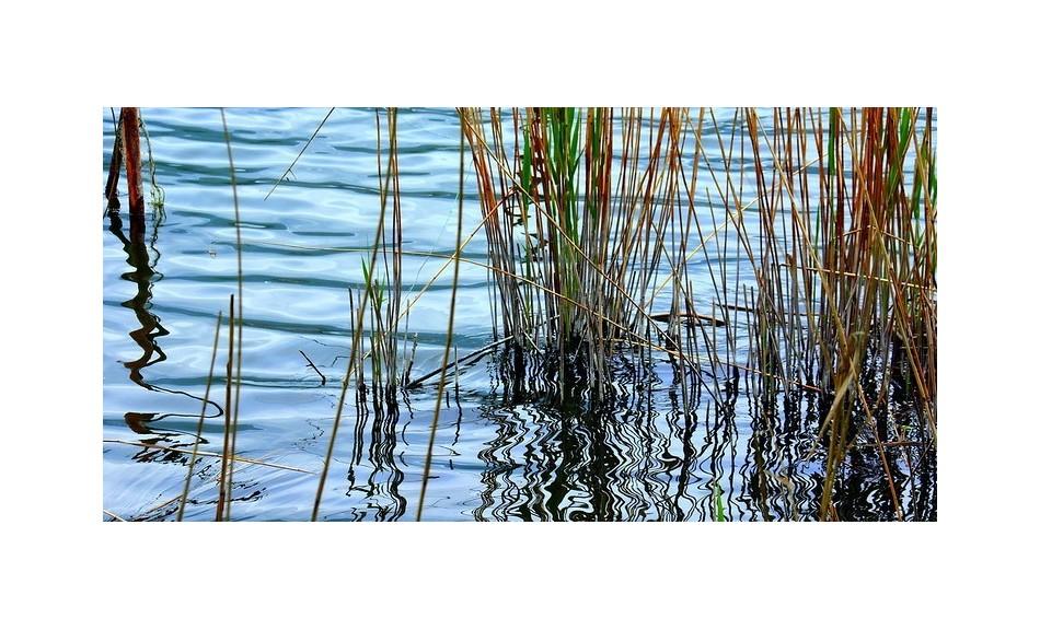 Nozioni generali sulle piante acquatiche